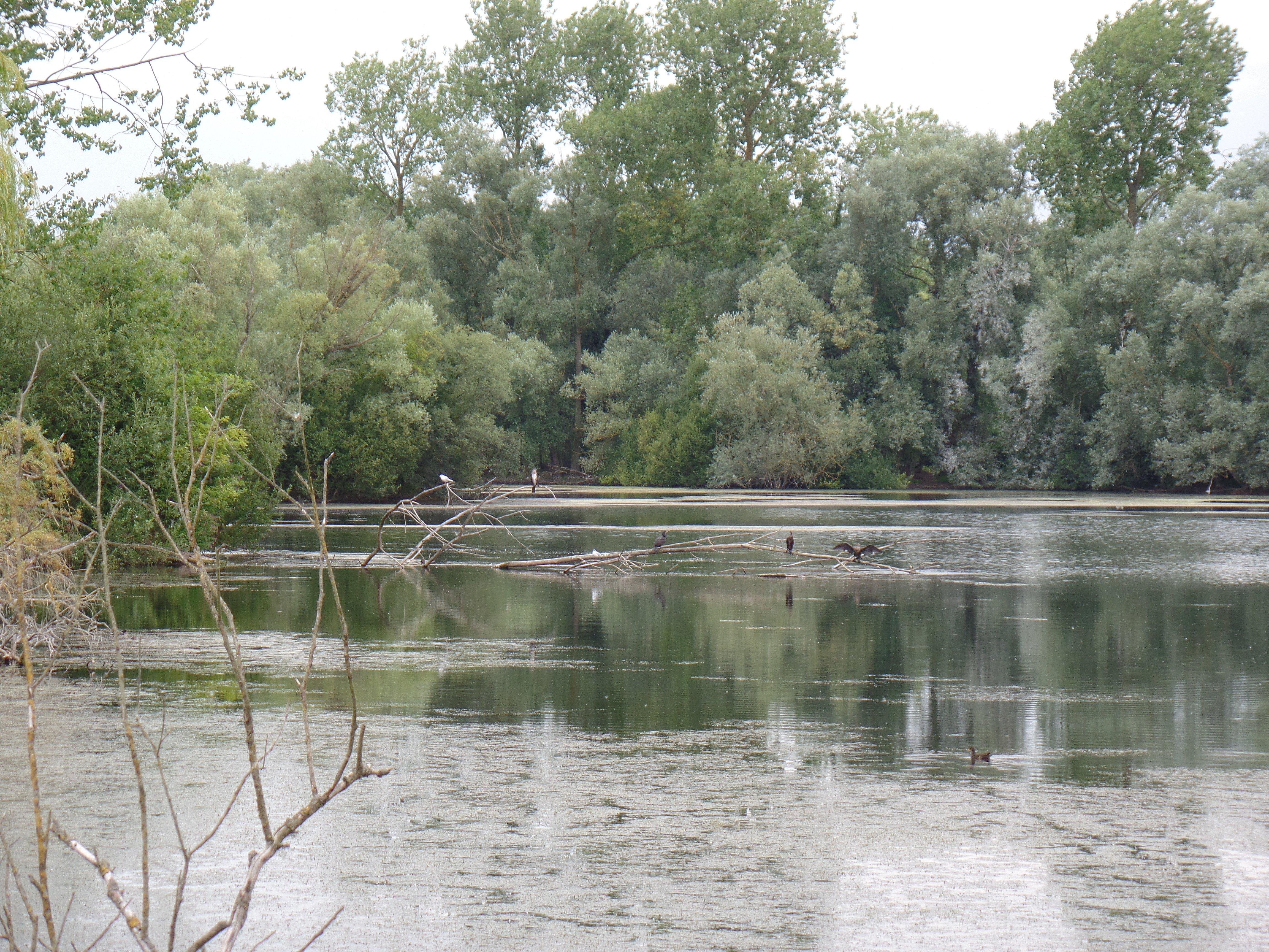 Lake Samsung Wbf
