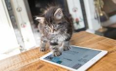 Apple iPad Mini 4 hero shot with kitten