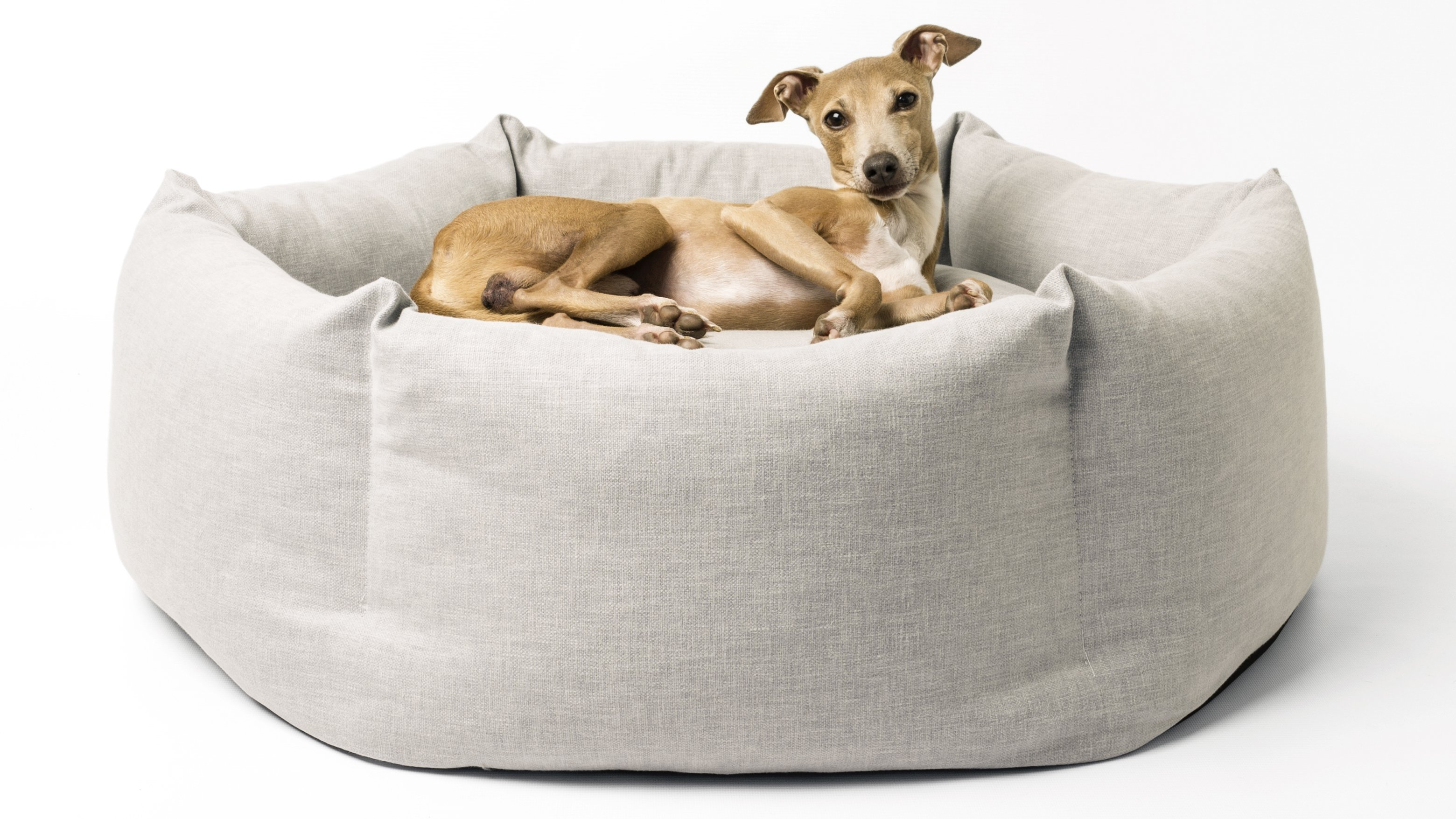 Picture of: Best Dog Bed The Cosiest Cots And Couches For Your Canine Companion Expert Reviews