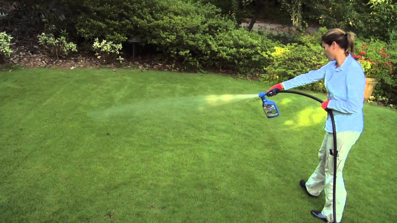 Best Weed Killer Get Rid Of Unwanted Weeds On Your Lawn