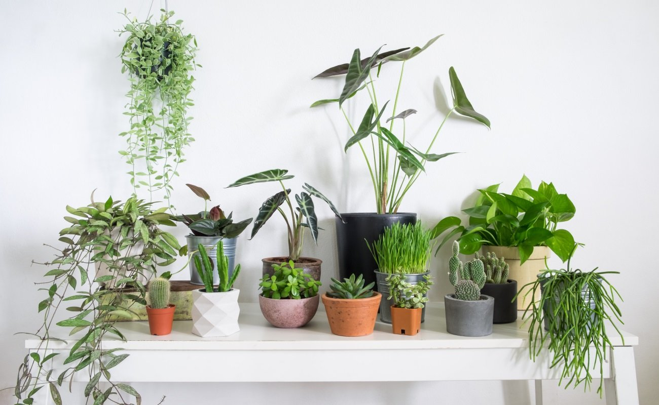 Best house plants 2021: Our favourite indoor foliage for ...