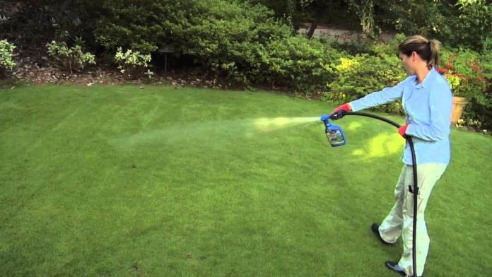 Some Known Questions About Roundup Weed Killer.