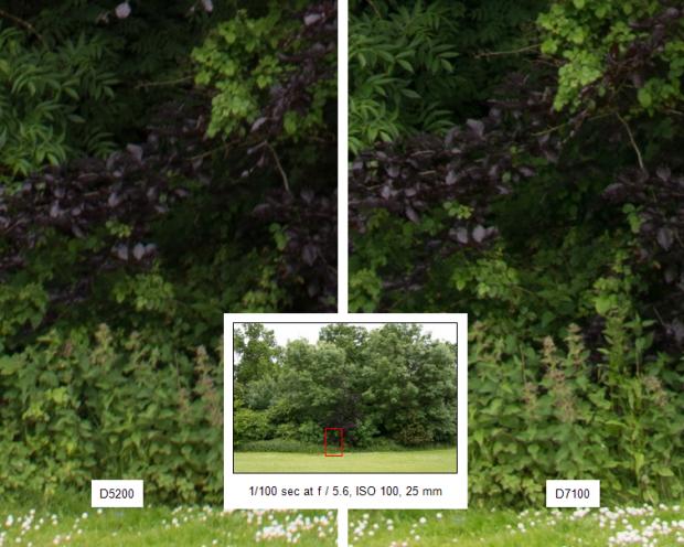 Nikon D7100 sample shot